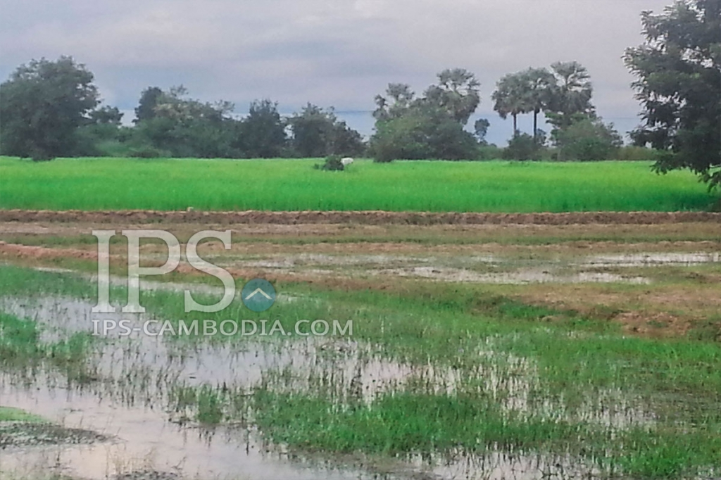 Agricultural Land for Sale in Siem Reap