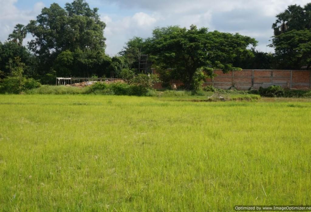 Development Land  for Sale in Siem Reap - Sala Kamruek