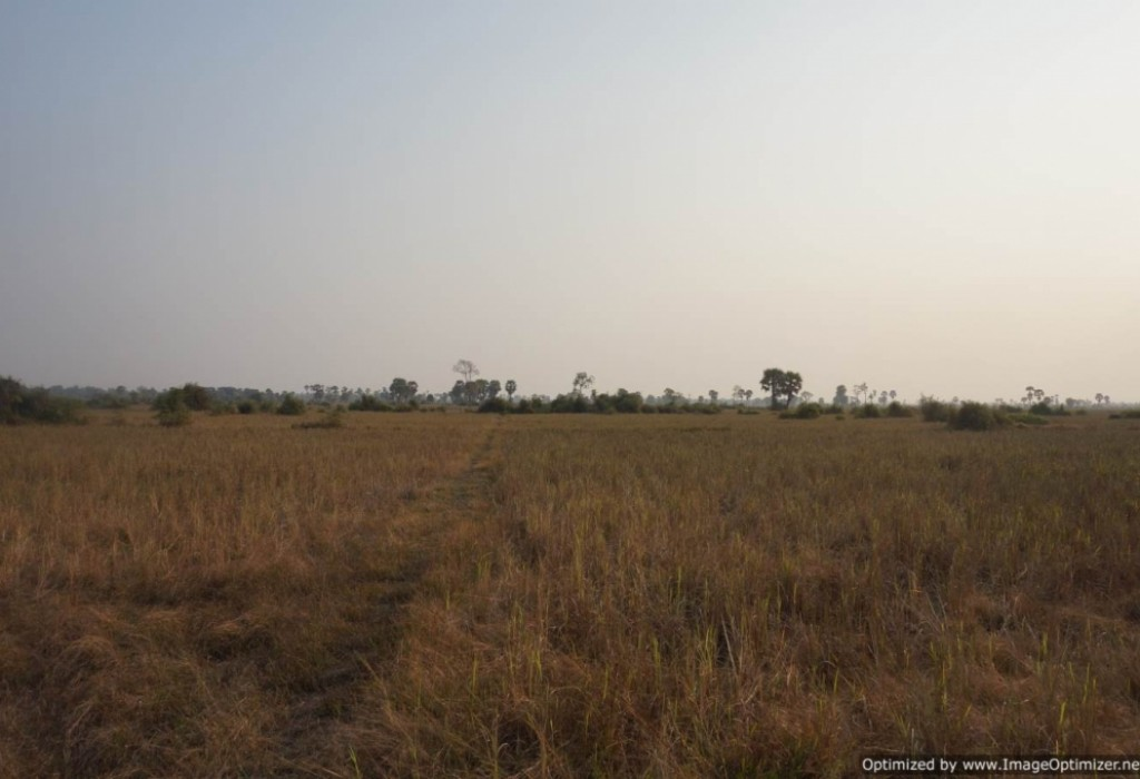 Agricultural Land for Sale in Siem Reap - Bakong