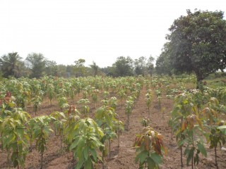 Land for sale in Ta Khmau - 4.5 hectares