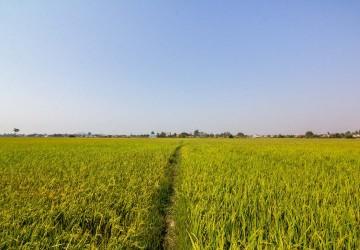 8000 Sqm Land For Sale - Chreav, Siem Reap