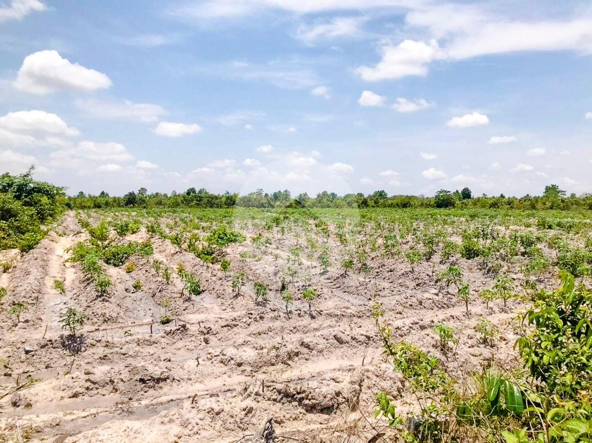 24462 Sqm Agricultural Land For Sale - Banteay Srei, Siem Reap