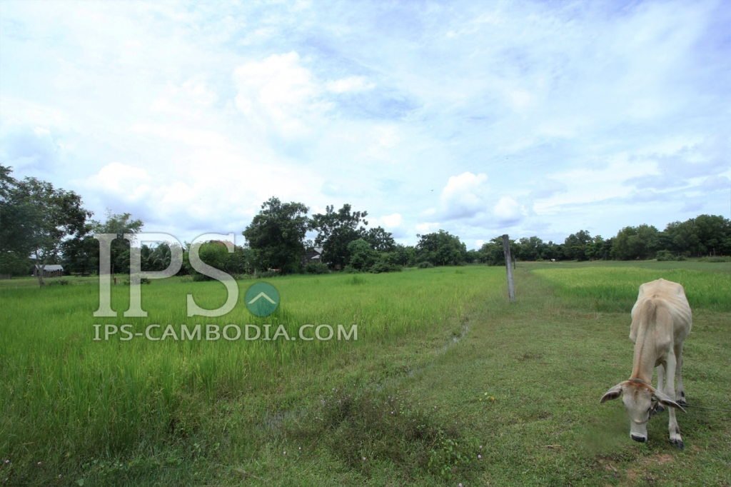 Land for Sale in Siem Reap - 12,000 sqm.